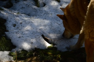 Receding Snowline