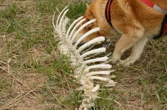 A whale skeleton maybe!