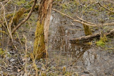 Mushing Through the Bog