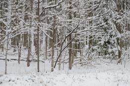 Late Snow