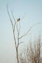 Dawn Hawks